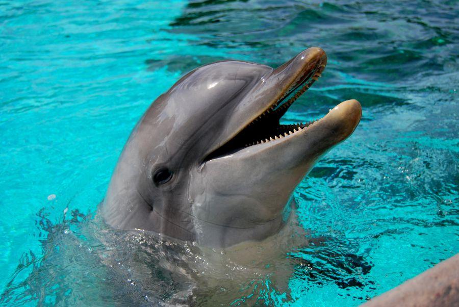 delfín, poznavaci zajazd, poznavacie zajazdy, zajazdy pre deti, satur, poznavacky pre deti