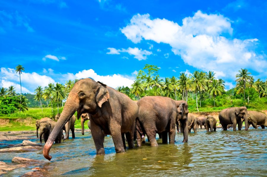 sri lanka, slon, slony, poznavacie zajazdy, poznavacky pre deti, zajazdy pre deti, exotika, dovolenka v exotike, letna dovolenka, satur