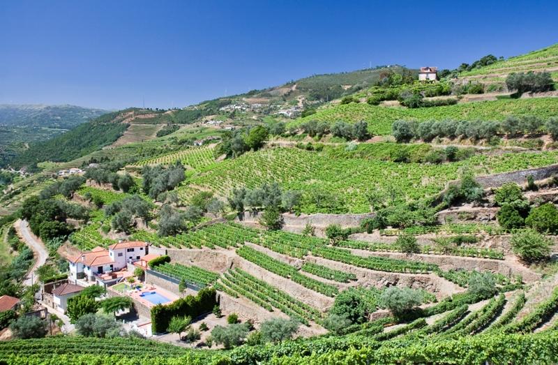 vinice, portugalsko, portske vino, letna dovolenka v portugalsku, satur, poznavaci zajazd