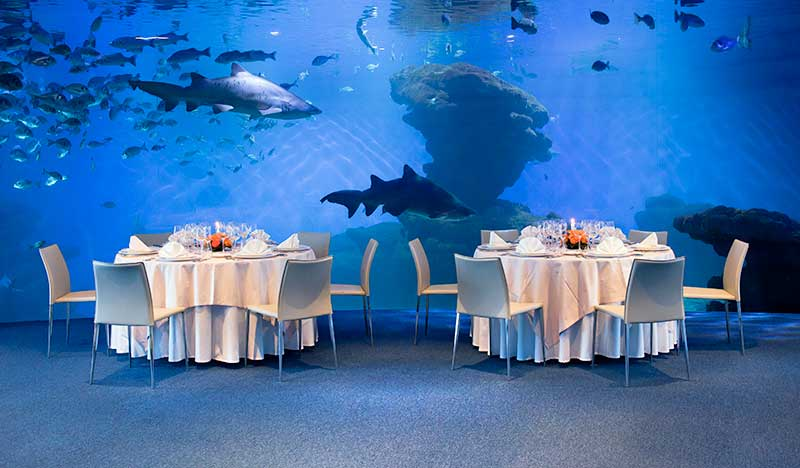 akvarium, palma de malorka, malorka, letna dovolenka na malorke, letna dovolenka pri mori, satur
