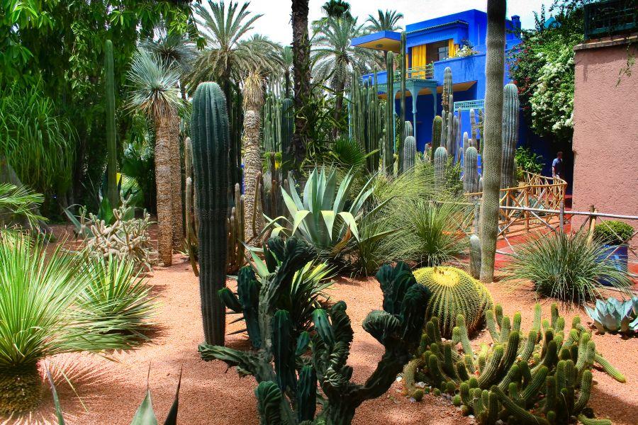 maroko, dovolenka v maroku, orient, dovolenka v oriente, poznavaci zajazd, satur, jardin majorelle, zahrada, yves saint lauren