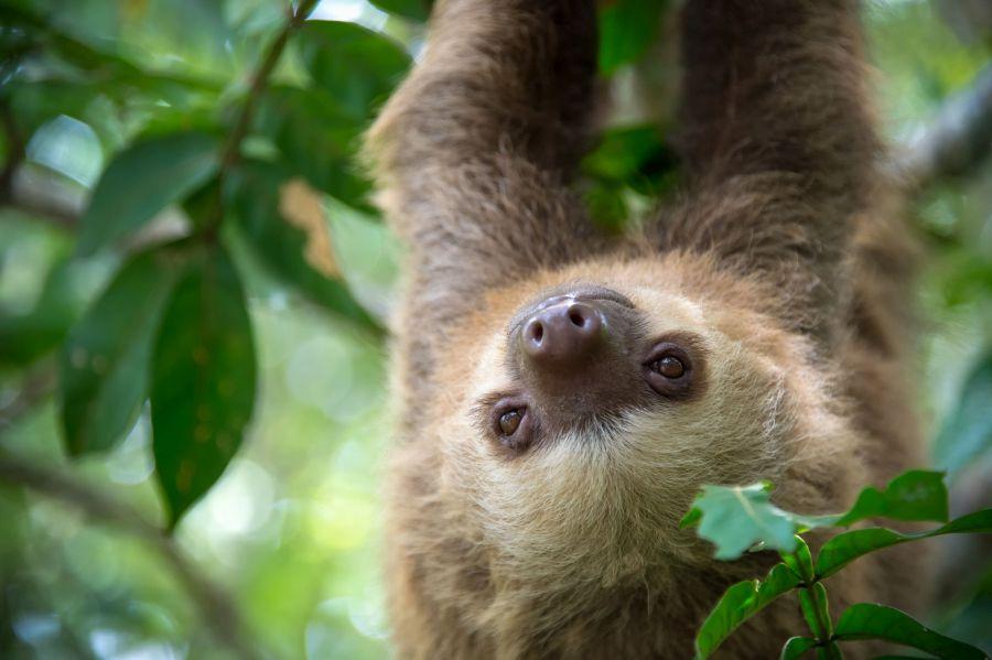 kostarika, exoticka dovolenka, dovolenka v exotike, satur