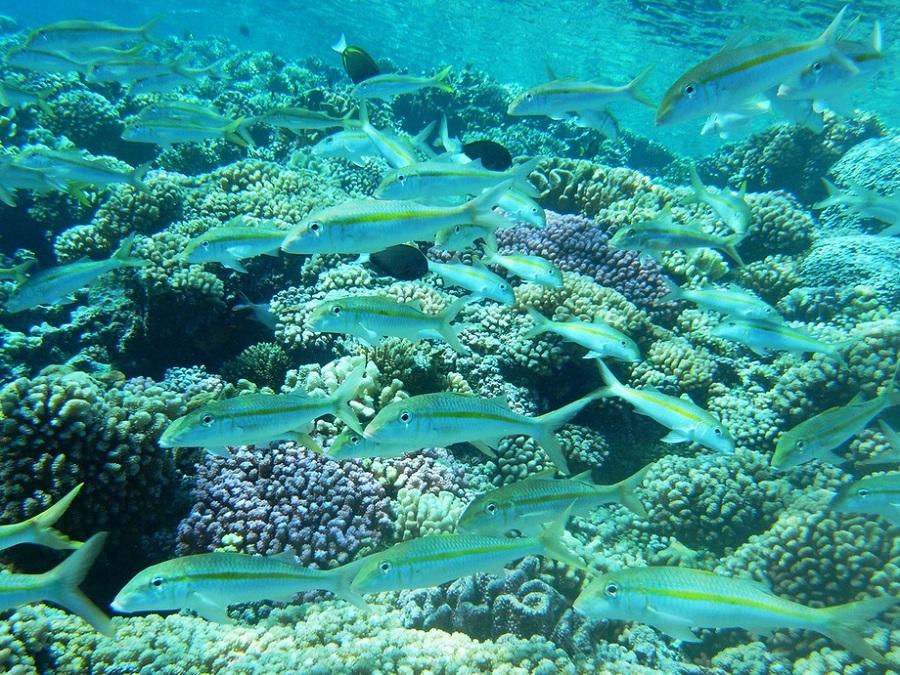 tuamotous, polynezia, exoticka dovolenka, satur