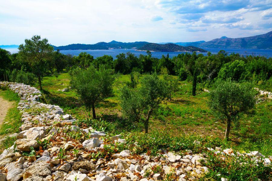 juzna dalmacia, top atrakcie, dovolenka v chorvatsku, letna dovolenka pri mori, satur, lopud