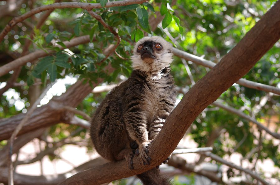 tenerife, top atrakcie, dovolenka na tenerife, dovolenka na kanárskych ostrovoch, satur, monkey park