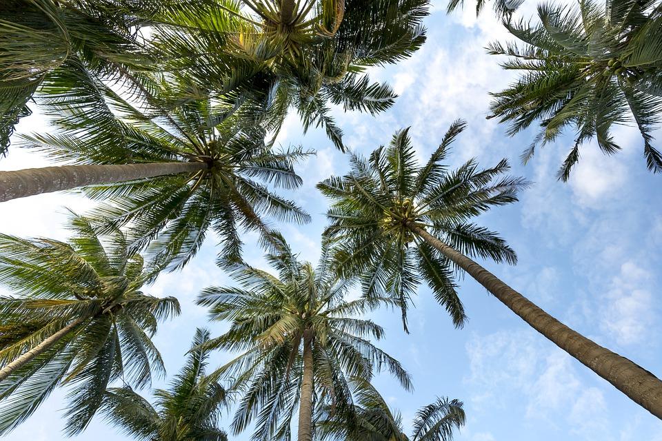 palmy na plazi