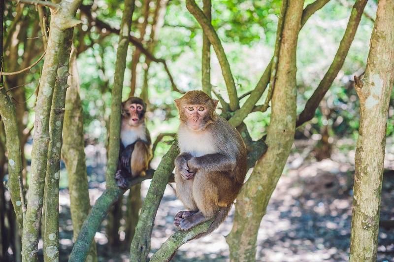 opice v parku soberiana na paname