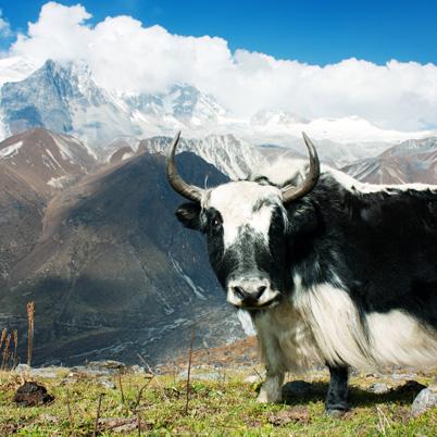 Satur Cestokino na temu Nepál