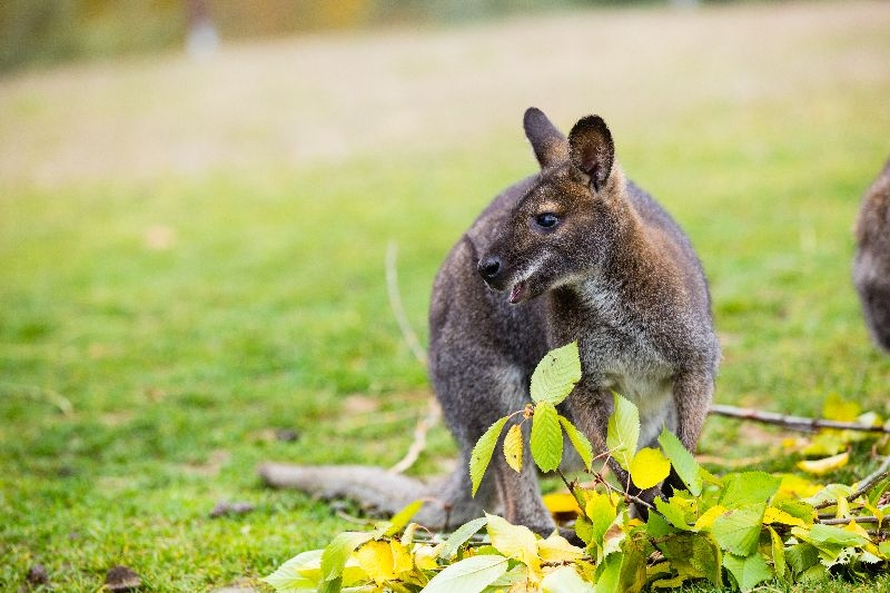 Dating in hopkinton iowa in Australia